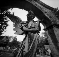 Pragfriedhof Stuttgart II (Sascha Schrder) Tags: 6x6 graveyard germany pinhole rodinal zero2000 adox