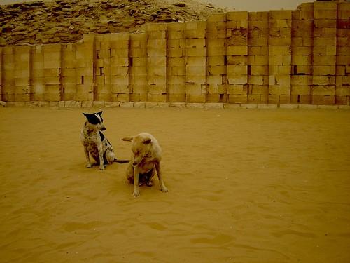 VENTISCA INCOMODA PERROS EN EGIPTO