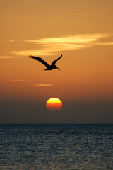 Un pelicano se pasea sobre el sol!!! (Hugo jr) Tags: sol mxico atardecer mar isla vacaciones caribe quintanaroo holbox