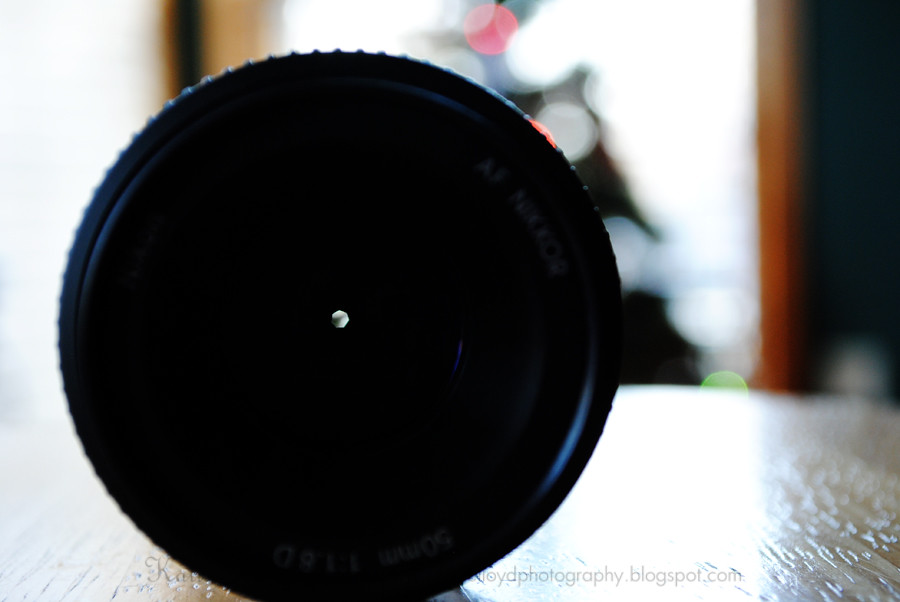 Tree-in-lens-4