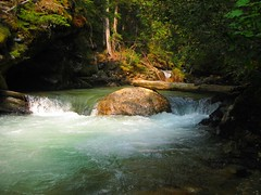 Love of Water (janefenya1313) Tags: trees nature water beautiful rock creek stream flowing