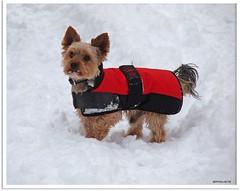 Frostschutz - frost protection