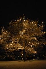 God jul - Merry Christmas (from Christmas past) (DameBoudicca) Tags: christmas winter light snow lund tree night weihnachten navidad noche nacht sweden schweden sverige jul nol natale nuit notte natt suecia sude svezia lundagrd