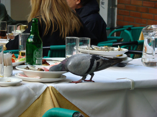 Pigeon's meal - cool!