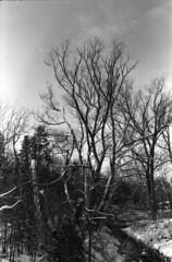 Winter creek 5 (hpulley) Tags: winter blackandwhite film waterloo expired ilforddelta400 canonftbn ilfotecddx ilfostop ilfordrapidfixer yellow8filter ilfotol canonfd35mmf2sscii