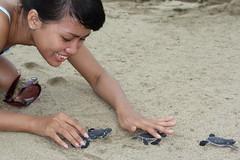 Hana Releases Baby Turtles into the Ocean, Sukamade (Rowan Castle) Tags: indonesia java release hana jawa babyturtles img1386 sukamade new400d tukik