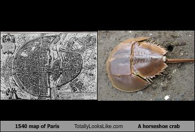 1540-map-of-paris-totally-looks-like-a-horseshoe-crab
