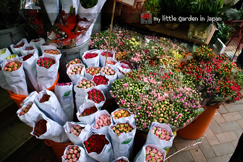 Hong-kong-flower-market-7
