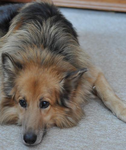 Old dog :)
