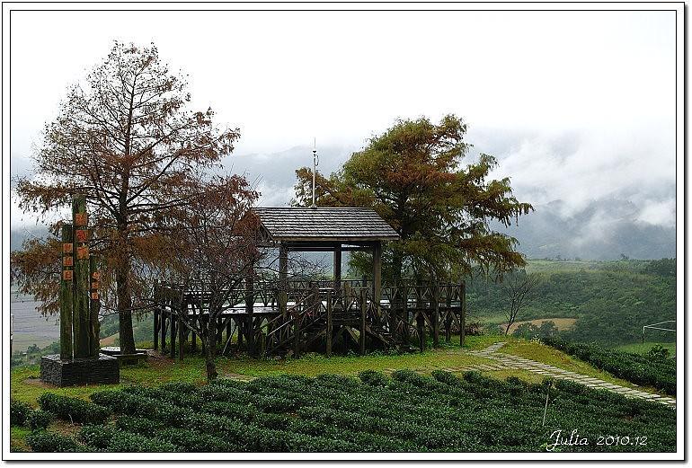 玉蘭茶園 (19)