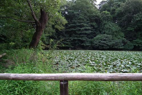 池・広角端