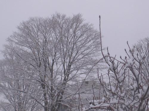 January 2011 002
