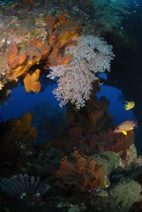Bali diving Dive Concepts_068