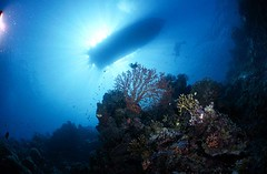 Bali diving Dive Concepts_031