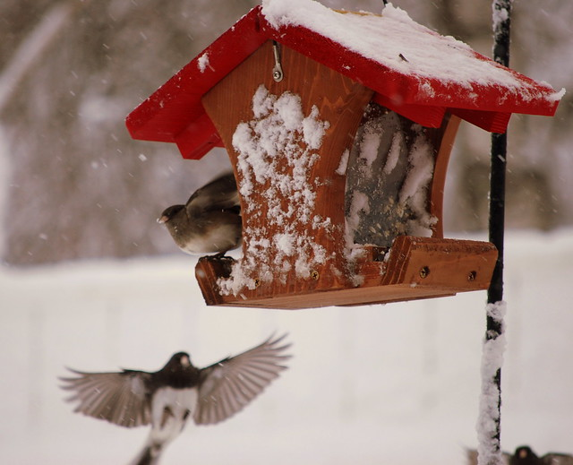 Winter birds 1