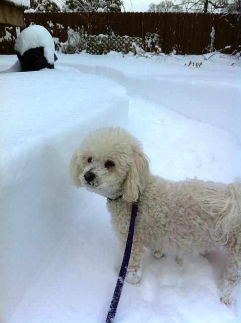 Snow clo