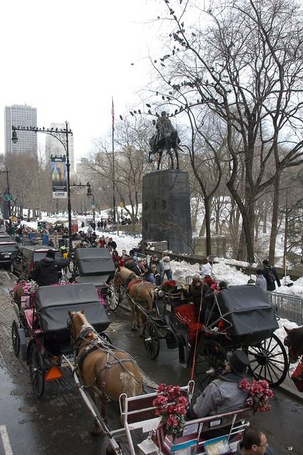 d8 tour central park horses