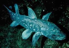 poisson préhistorique
