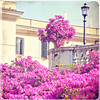 when in Rome (sma_kee) Tags: pink flowers italy rome roma texture window lamp sunshine architecture vintage fence square spring italia streetlamp details fuchsia happiness piazzadispagna dreamy oleander spanishsteps clearskies oleanders bylesbrumes