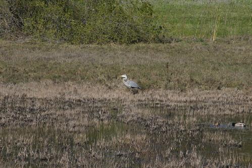 wetland 039