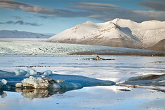 Jkulsrln / Glacier Lagoon, south-coast Iceland (skarpi - www.skarpi.is) Tags: winter mountain mountains cold bird ice birds island iceland wildlife postcard january seal seals lon iceberg sland jokulsarlon jkulsrln vatnajkull wintertrip janar pstkort lni fuglalf dralf