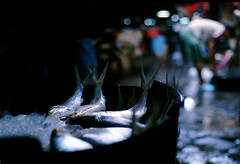 Surabaya Series : Fresh Fish (?) (W  M Soo) Tags: analog indonesia market fishmarket surabaya pasar smokedfish nikonfm traditionalmarket ikanbandeng ikansalai