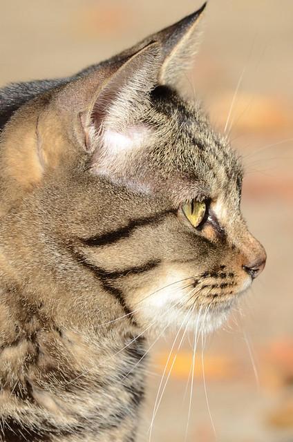 Park Cat_0366