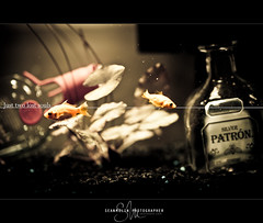Just two lost souls. (Sean Molin Photography) Tags: plants fish water aquarium photographer underwater goldfish bokeh p