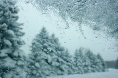 Windshield winter wonderland (SolsticeSol) Tags: trees winter snow ice pine rural drive frost december with snowy michigan country snowcapped dreamy iced windshield pinetrees winterwonderland snowscene winterscenes wintery snowroad carwindshield winterscene adamichigan kentcounty snowyroad adami snowyscene snowsnowsnow michiganwinter winteryscene takenthroughthewindshield michigansnow beautifulmichigan wintershere snowypines winterinmichigan beautifulwinterscenes snowypinetrees winterinthecountry michiganscenes michiganlandscape snowypinetree countryimages winterimage snowimage michiganlandscapes countrysnowscenes roadwithsnow snowywindshield iceonawindshield pinetreeswithsnow winteryimage serenewinterscene beautifulwinterimage winterycountryscene winterycountryimage dreamywinterimage beautifulwinterimages ruralsnowimages ruralsnowscene beautifulsnowscenes michiganwinterimages winterwindshield michiganwinterscenes windshieldimages michigansnowimages beautifulmichiganimages imagesofmichigan michiganimages