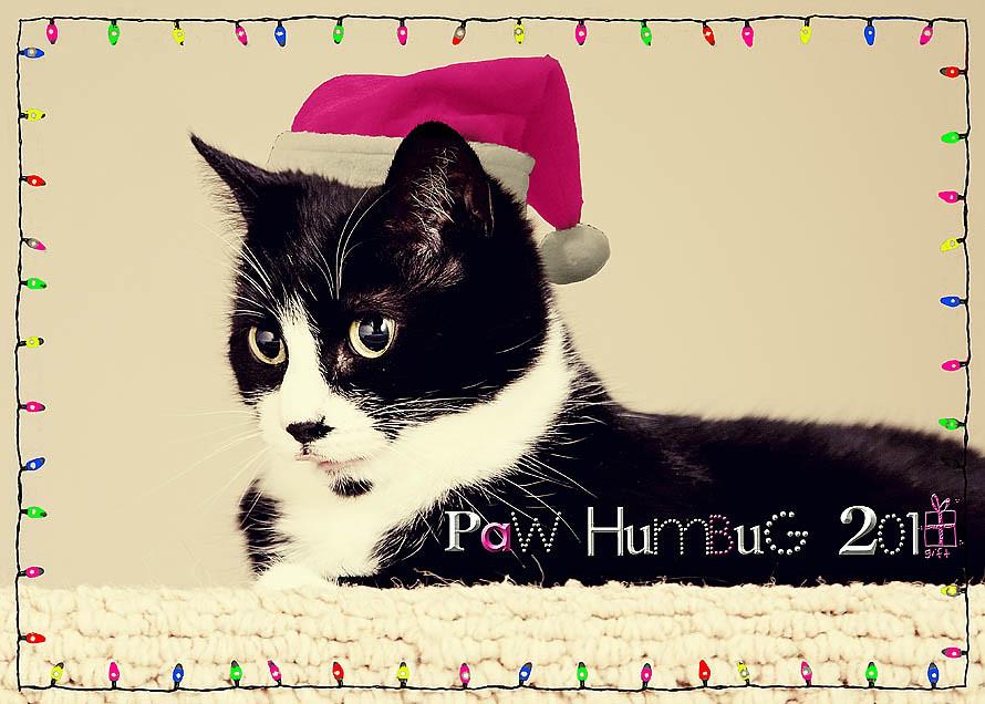Paw Humbug Card RS
