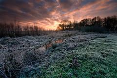Sunset frost (Jan Linskens) Tags: winter sunset nature landscape frost wintersunset natuur peas limburg landschap potofgold zonsopkomst leunen janlinskens fotoclubvenray