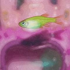 Eric (vardo) Tags: fish acquarium acquatic