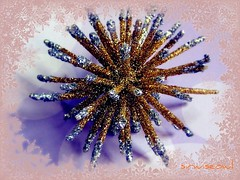 The Magic Of Christmas Theme (sirwiseowl) Tags: christmas glitter decoration ornament theme picnik tabletop beautyunoticed