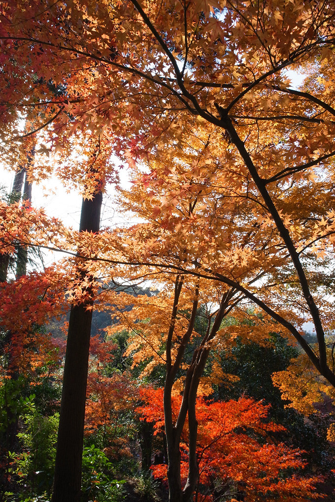 colored leaves at Kiyomizu-dera temple