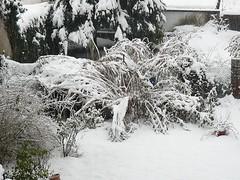 Winter2010 001