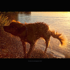 sunshower (stella-mia) Tags: sunset dog sun water norway happy drops drop explore doggy frontpage 2470mm hightlight canon5dmkii happydag