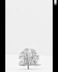 Lonely Tree (HD Photographie) Tags: blackandwhite white snow black france macro tree landscape noir noiretblanc pentax explorer ardennes explore sp di if neige hd af minimalism paysage tamron arbre blanc f28 ld herv 70200mm k7 minimaliste tamronspaf70200mmf28dildifmacro dapremont hervdapremont