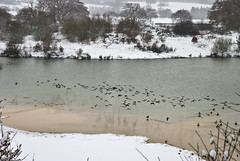Snow (Ben124.) Tags: winter lake snow ice birds frost merstham
