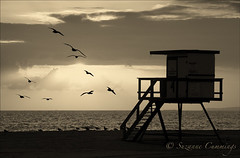 Lazy Afternoon (SLEEC Photos/Suzanne) Tags: california sunset seagulls beach monochrome sunsetbeach lifeguardtower afernoon truthillusion