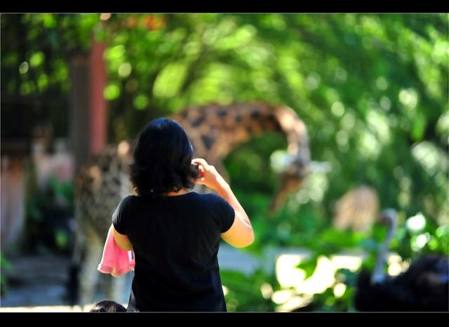 Zoo Taiping 13