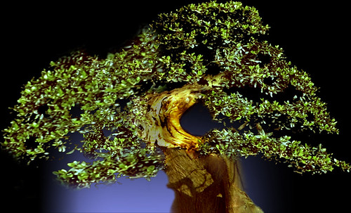 """Bonsai 088 • <a style=""""font-size:0.8em;"""" href=""""http://www.flickr.com/photos/30735181@N00/5261325927/"""" target=""""_blank"""">View on Flickr</a>"""