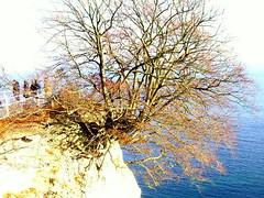 berlebenskampf (SaSalemphoto) Tags: sea tree germany deutschland meer herbst rgen baum kreidefelsen kreide