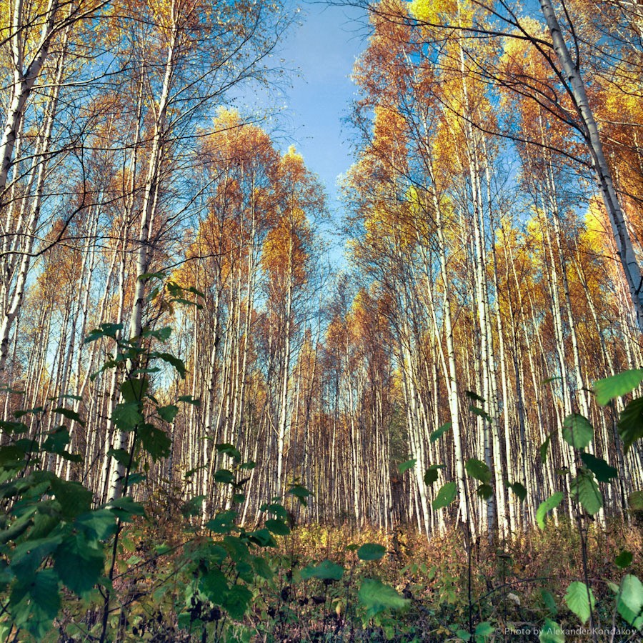 Autumn in Russia 1997 © Photo by Alexander Kondakov