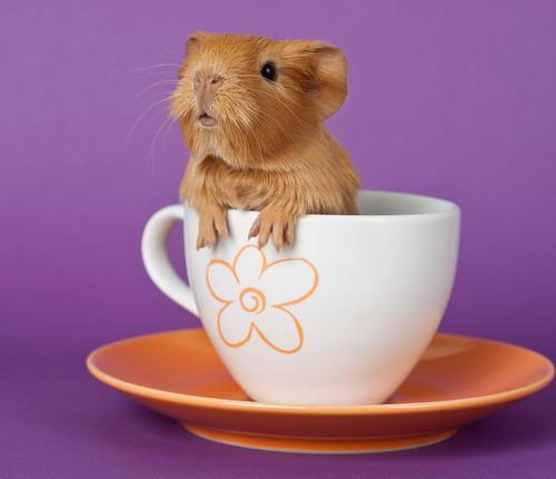 cappuccino by marsula