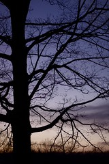 (The Top Hat Bandit) Tags: sunset tree silhouette 50mm mac raw reddin edgedonkey