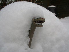 in bondage to winter