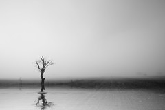Fog (Nick-K (Nikos Koutoulas)) Tags: reflection tree water fog greek nikon nikos minimal greece f4 vr nickk 1635mm     d700   koutoulas