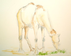 Breakfast time (travelingsuep) Tags: sketches camels doha penwatercolour