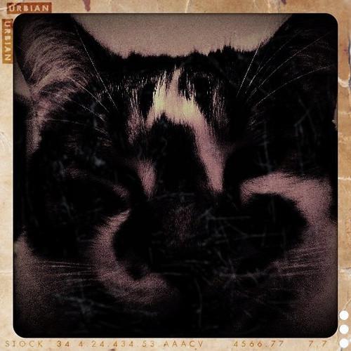 squashy cat