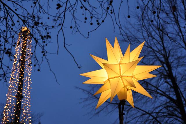 wonderland star